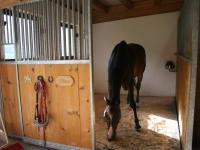 Pferd Gitano