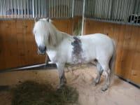 Pony Mozart