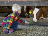 Kühe im Stall besuchen