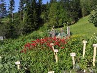 Kräutergarten