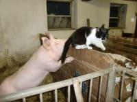 Tomcat Blacky, our house, and farm dog