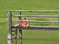 Unser Schwimmteich