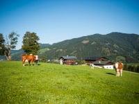 Der Egglbauer ist Ihr perfekter Ausgangspunkt zum Wandern