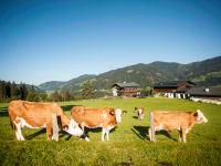 Den Kühen geht es auch sehr gut