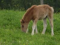 unser Fohlen Lilli