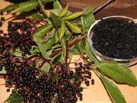 Schwarzer Hollunder aus dem Garten