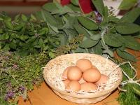 Kräuter , Eier
