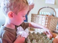 Beim Eier sortieren