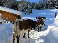 Unsere Kühe dürfen auch im Winter raus!!