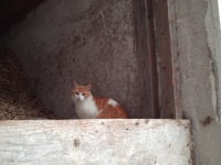 Katze Minni