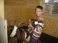 Johannes mit Ziegen