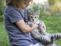 Katze wird verwöhnt