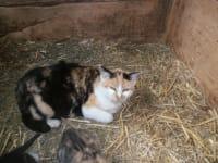 Unsere alte Katzenmama