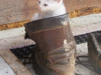 Der Schuh passt auch mir!