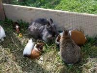 Kleintiere im Streichelzoo