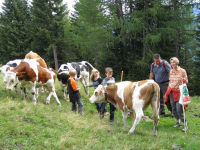 Gäste mit unseren Kühen auf der Alm