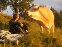 eine neugierige Kuh