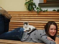 eine Katze ruht sich aus
