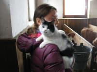 Erlebnis mit Katze