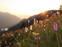 Blumenwiese auf der Alm