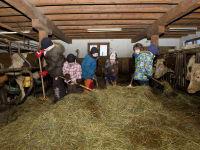 Tiere Kuhstall Bauernhof