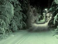 Langlauf Nacht Natur Ruhe