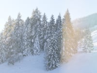 Winter Umgebung