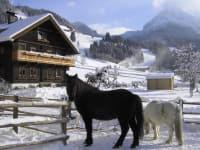 Haus mit Pferden im Winter
