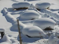 Kleintierzoo im Winter III