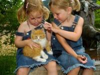 Katze mit Kinder Proneben Gut