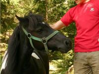 Pony Saleika