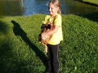 Hühnerfang