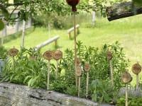 Frische Kräuter aus Maria's - Garten