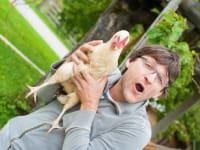 glückliche Hühner am Ferienbauernhof Arnoldgut