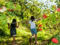 Ab durch den Obstgarten