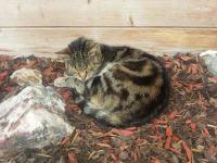 Unsere süße Gäste Katze Heidi