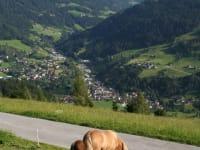 Panorama mit Pferd