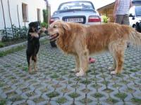 C?sar und Janko