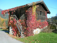 Mühle Herbst