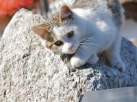 Tiere Katze Scharrerhof
