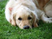 Unser Hund Tessa