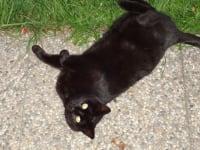 unsere Katze Schnurli