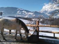 Winterauslauf Pferde