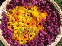 Ringelblume und Malve