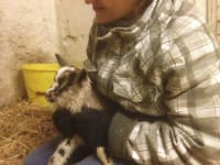 neu geboren - ihr Name ist Eiche