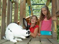 Kinder und Hase