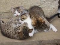 Katzenkinder am Alten Gehöft am Lormanberg Steirisches Vulkanland Österreich