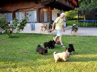 Bei uns sind Gäste mit ihren Hunden willkommen