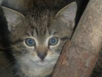 Katzenkater PUMA