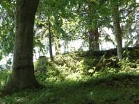 Blick zum Birkenwald